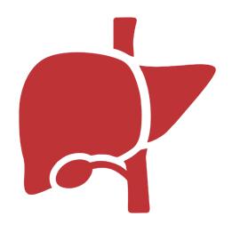 Best Liver Transplant